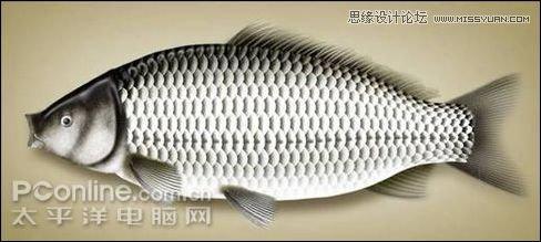 Photoshop鼠绘逼真的鲤鱼详细教程,PS教程,素材中国www.sccnn.com