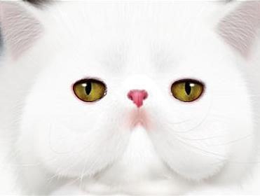 PS鼠绘小白猫头像技巧 三联