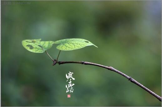 寒露时节的农谚    三联