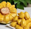 菠萝蜜怎么吃哪些部位不能吃