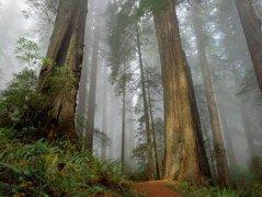 Photoshop制作一个阴暗妖气的树林