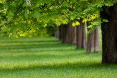 ps自学网教程之把绿荫的树林制作成秋天的金黄色